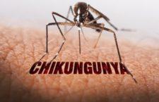 chikun-225x145